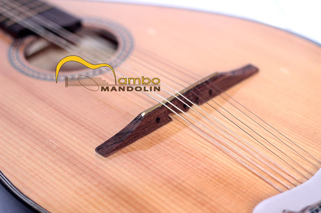 Ngựa đàn mandolin phải chắc chắn, không xê dịch.